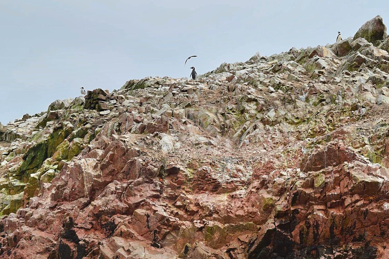 Tour Paracas Islas Ballestas Peru