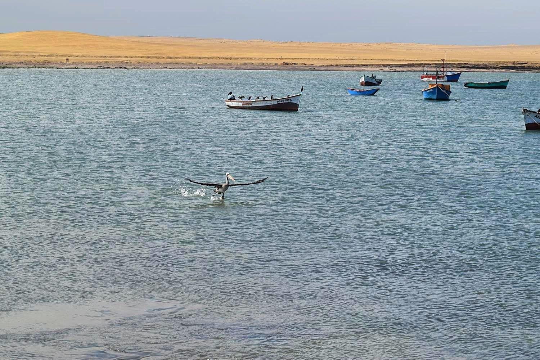 Paracas woestijn pelikanen