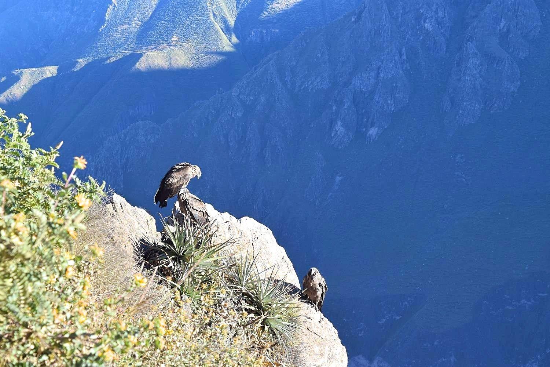 Cruz del Condor Colca Canyon Peru