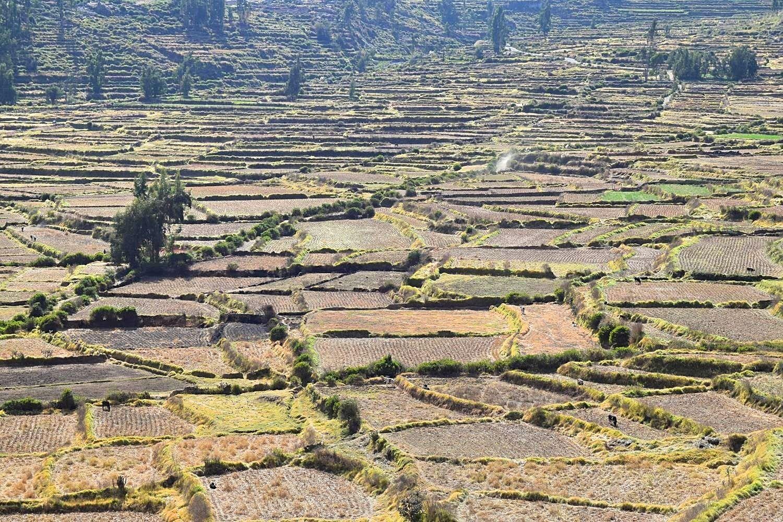 Fietsen in de Colca Canyon Peru