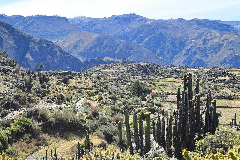 Hiken in Colca Canyon Peru