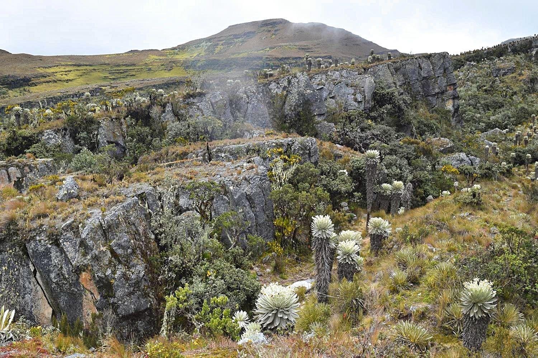 Paramo de Ocetá Mongui Colombia