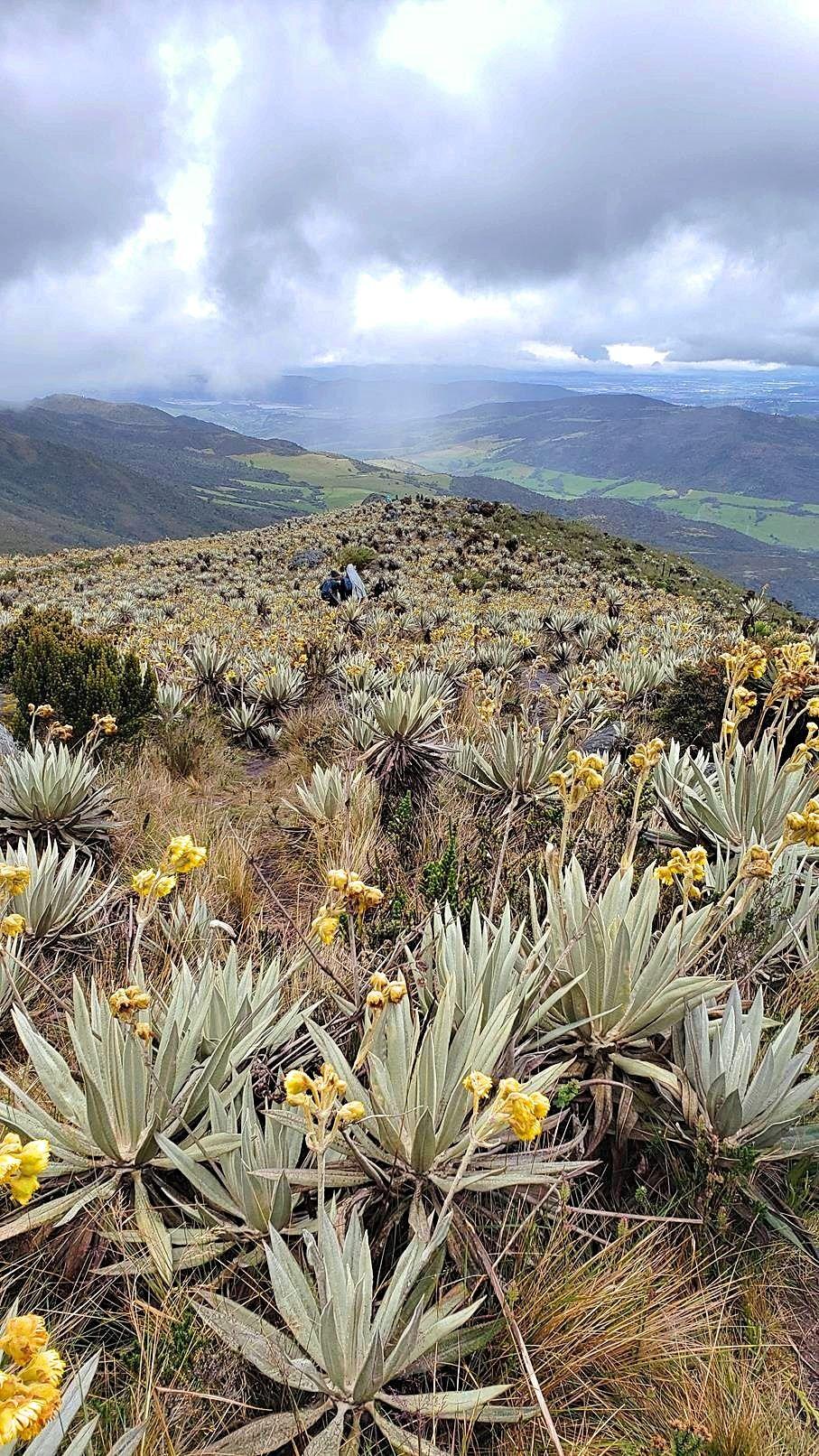 Hiken Colombia Chingaza Lagunas de Siecha uitzicht