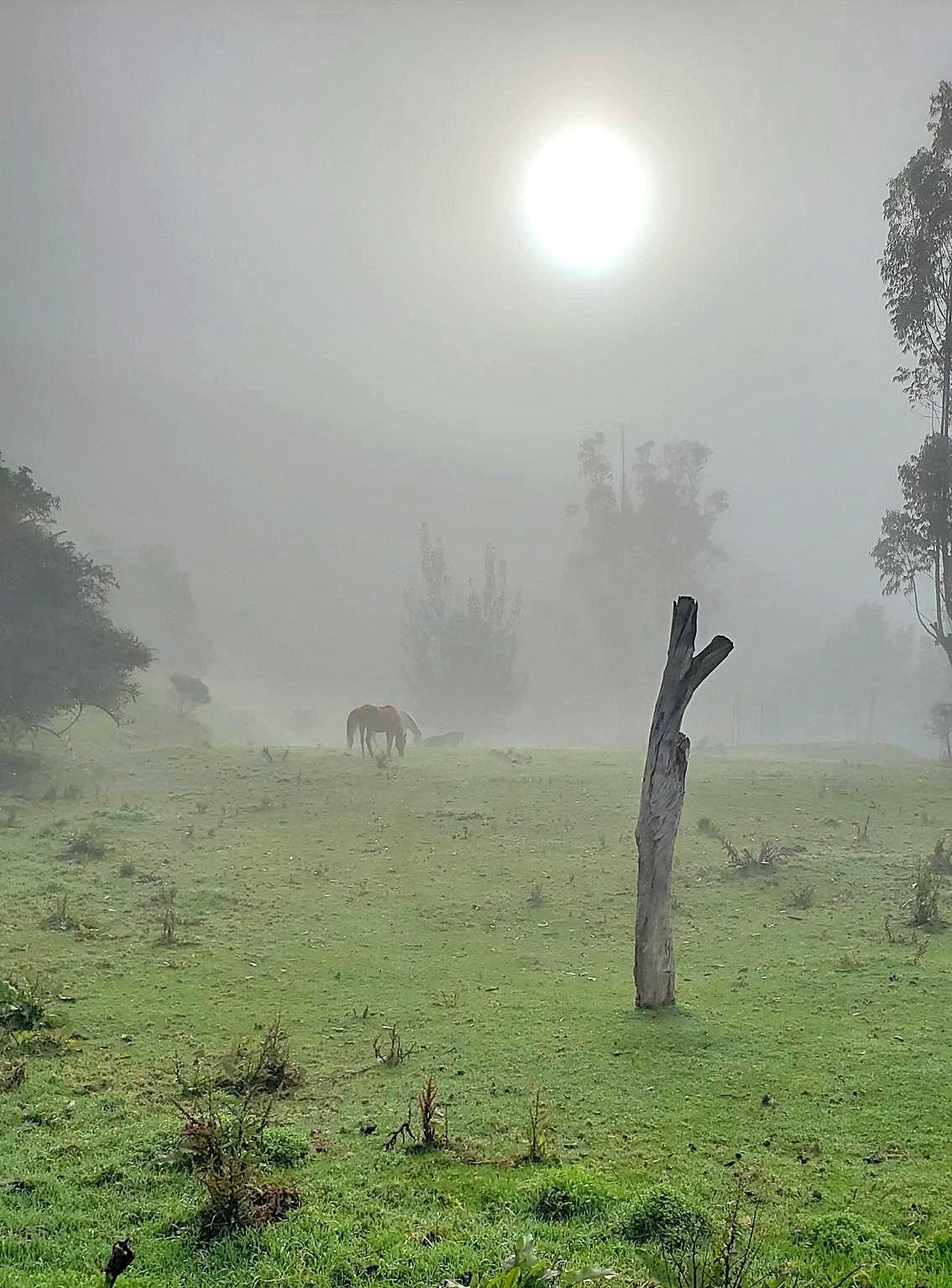 In de mist in Colombia