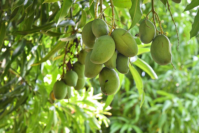 Mango's Colombia