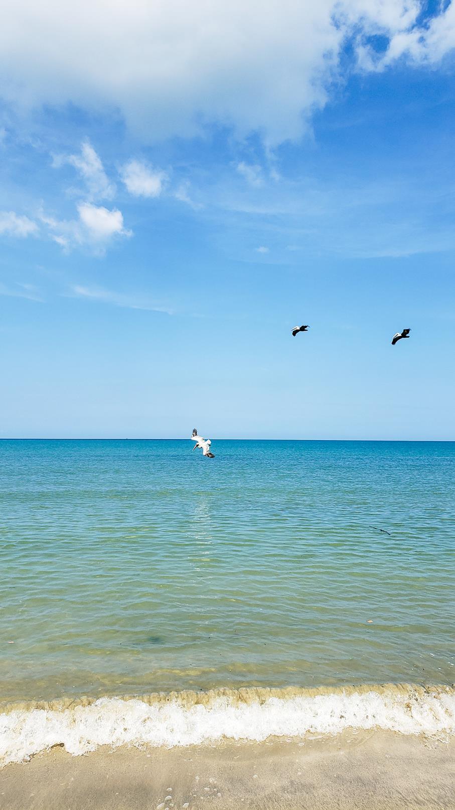 Pelikanen duiken in de zee Colombia