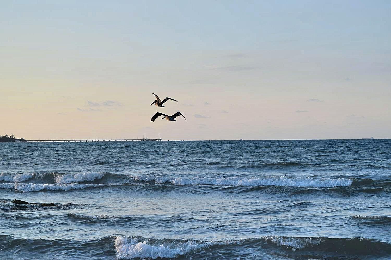 Pelikanen strand Colombia Coveñas