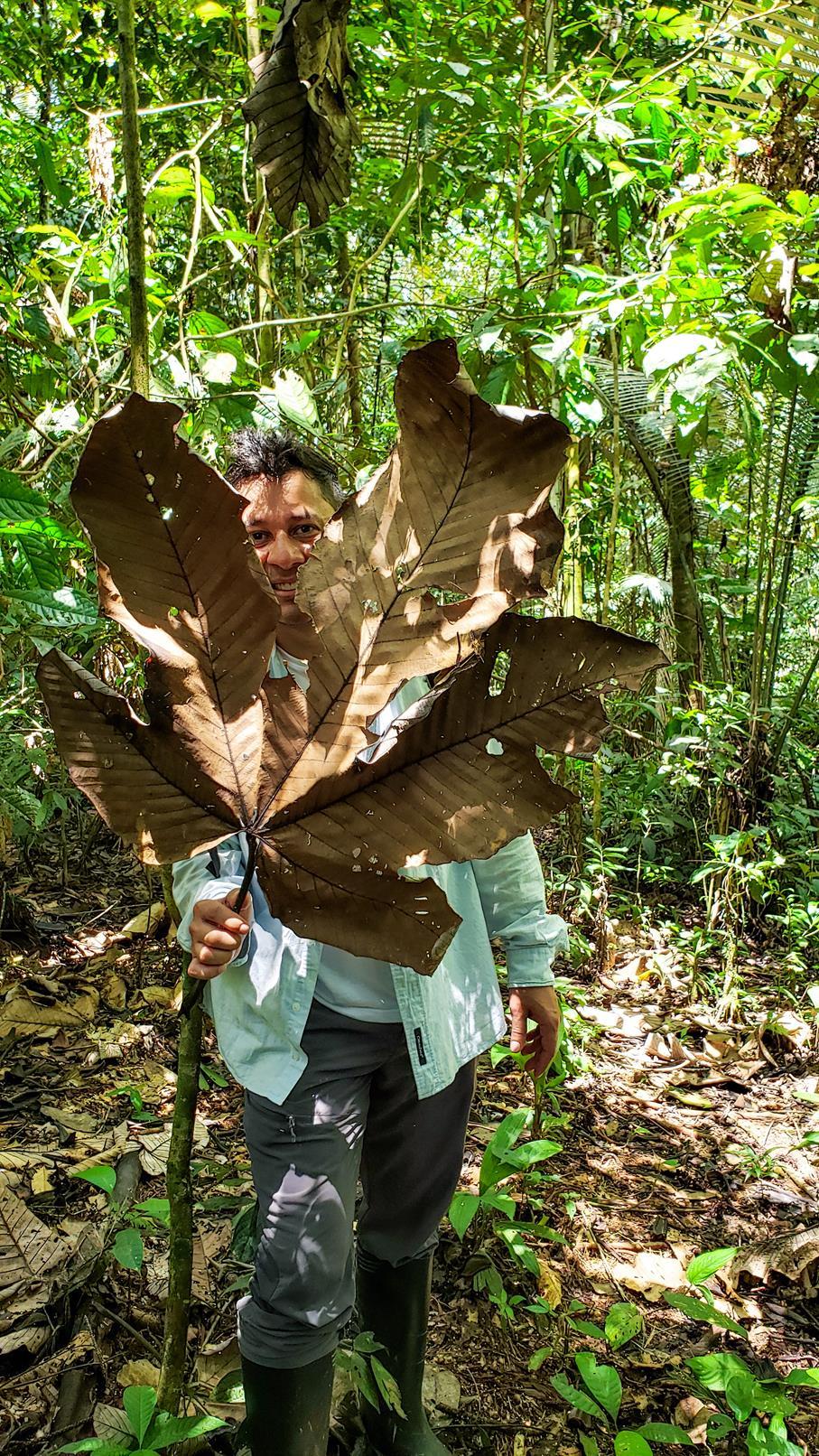 Amazone Zuid-Amerika Colombia