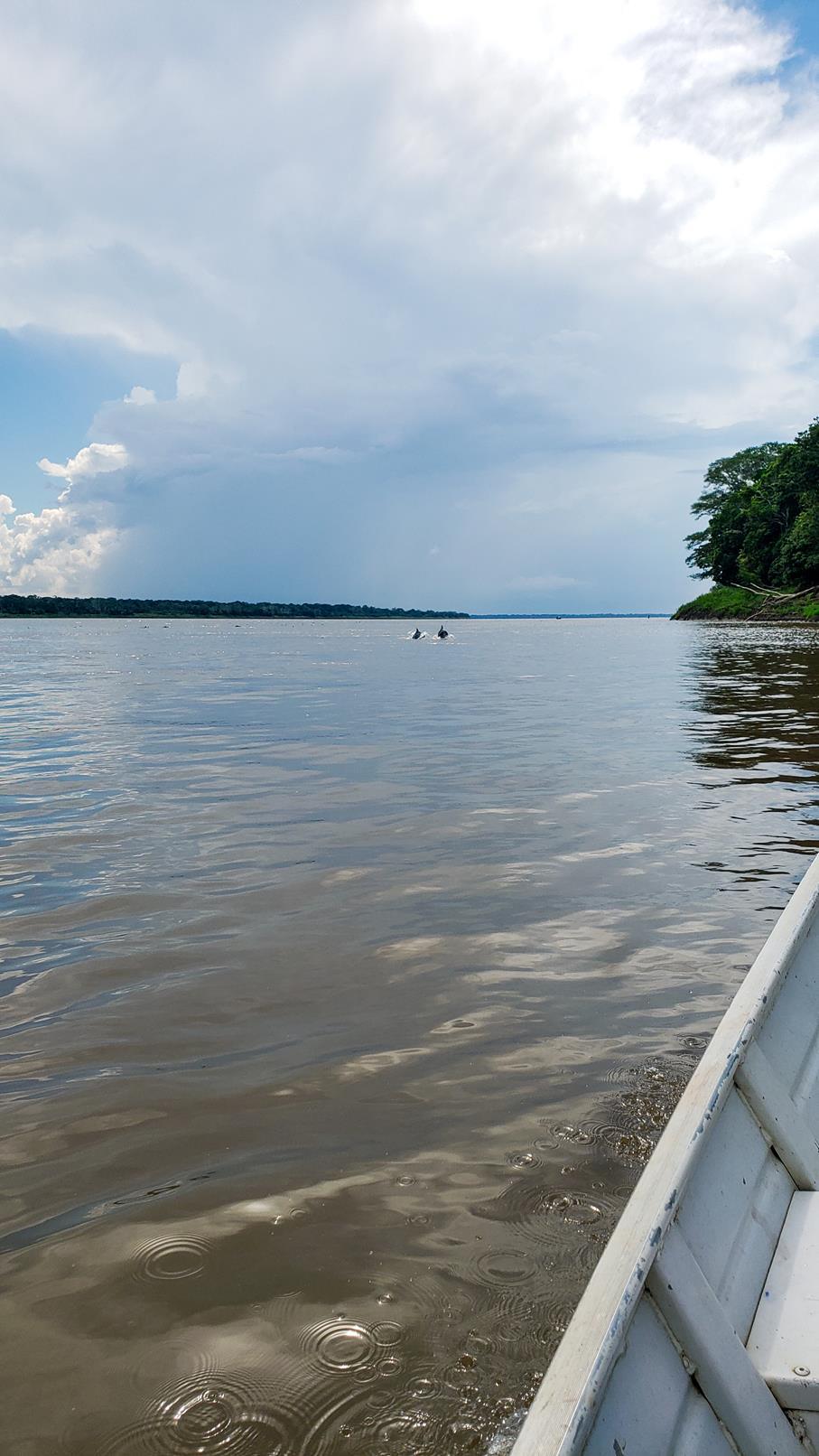 Dolfijnen Amazone rivier Colombia