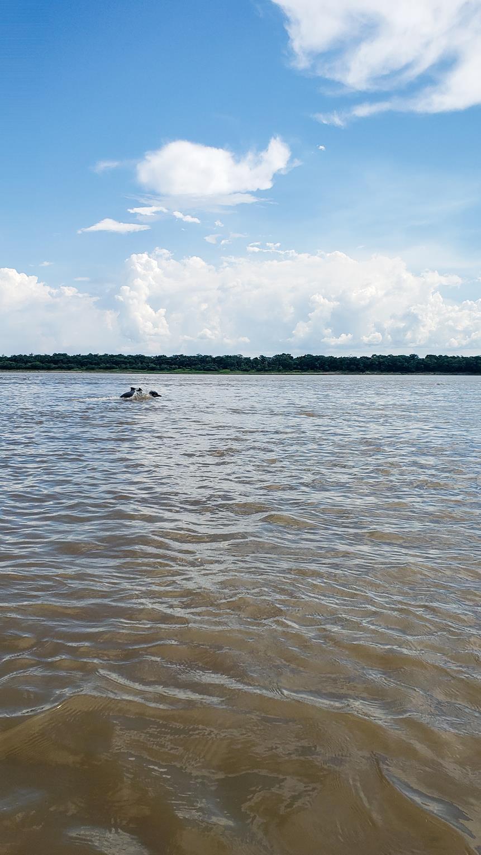 Dolfijnen Colombia