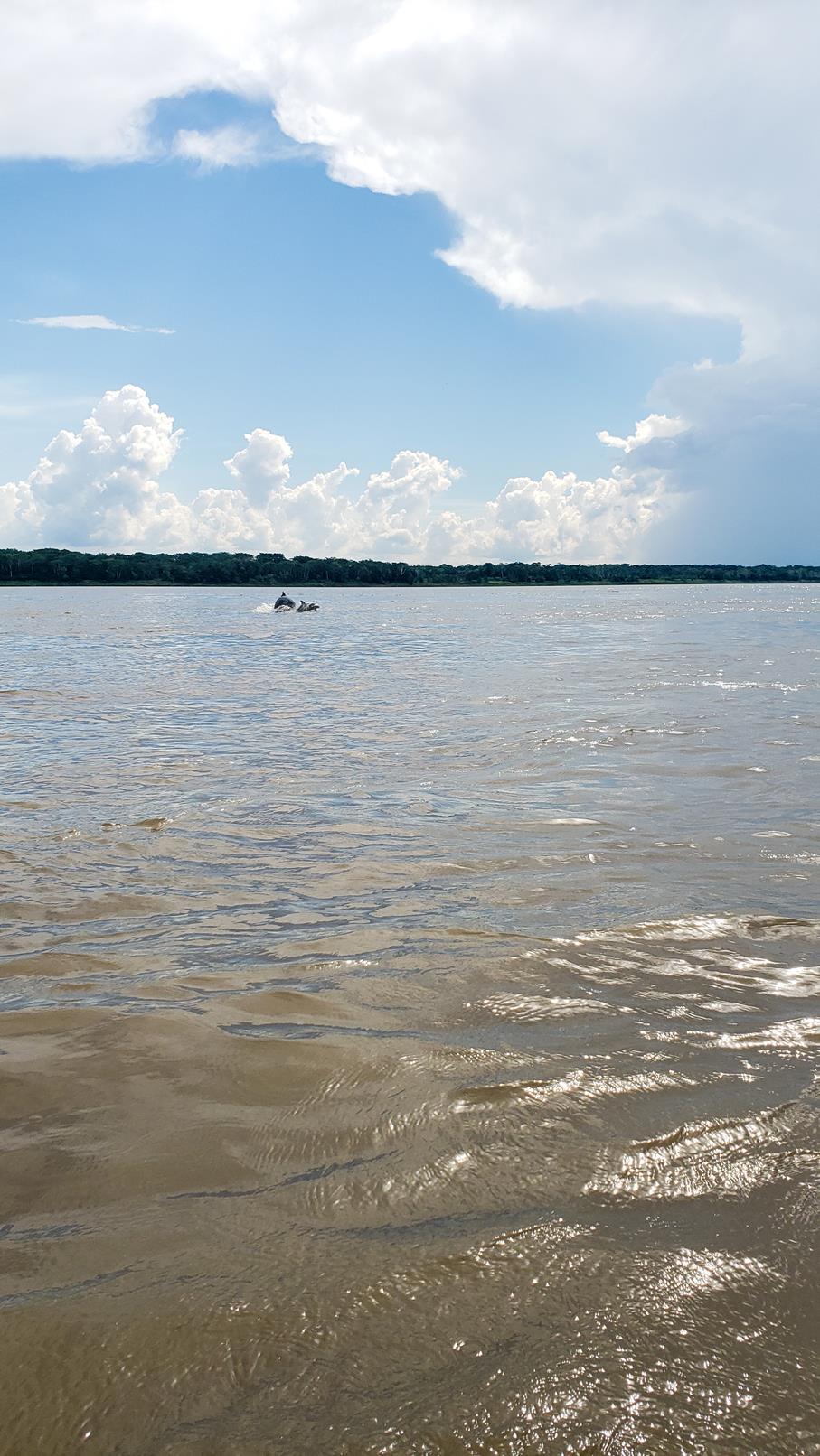 Dolfijnen zien Amazone regenwoud Colombia