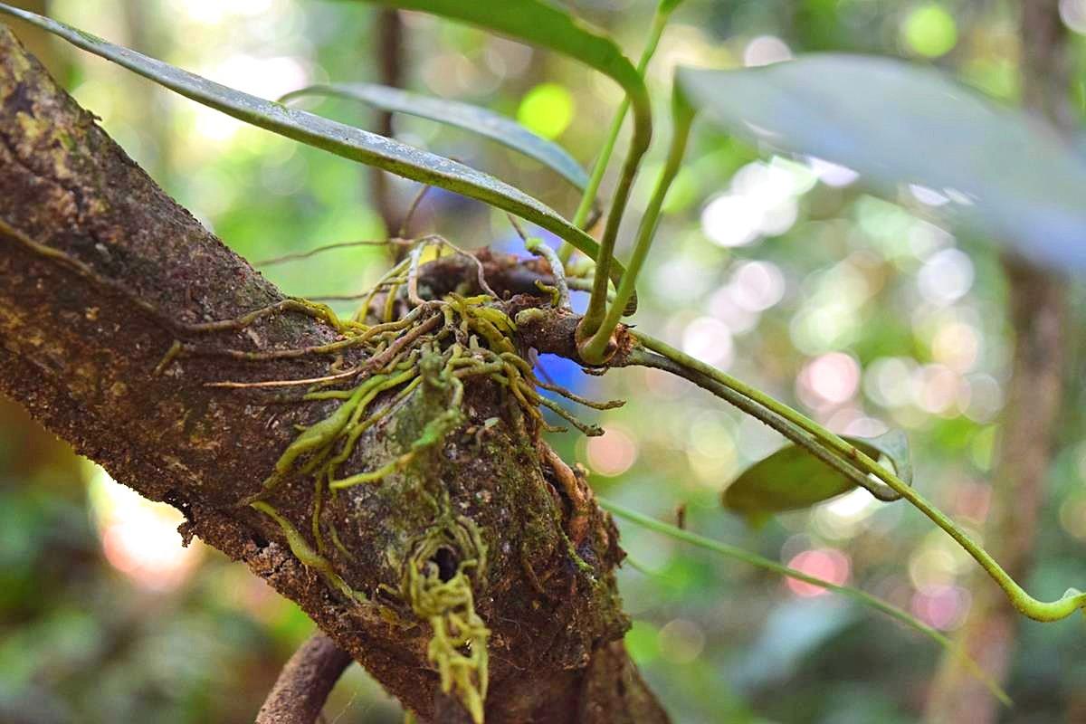 Jungle wandeling Zuid-Amerika