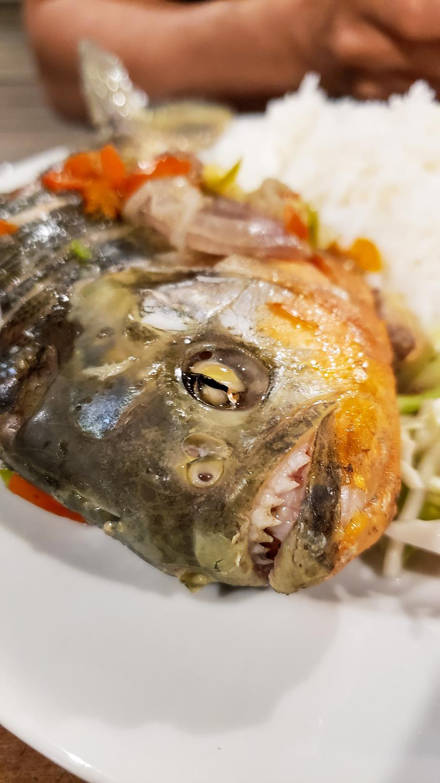 Piranha eten Amazone regenwoud Colombia