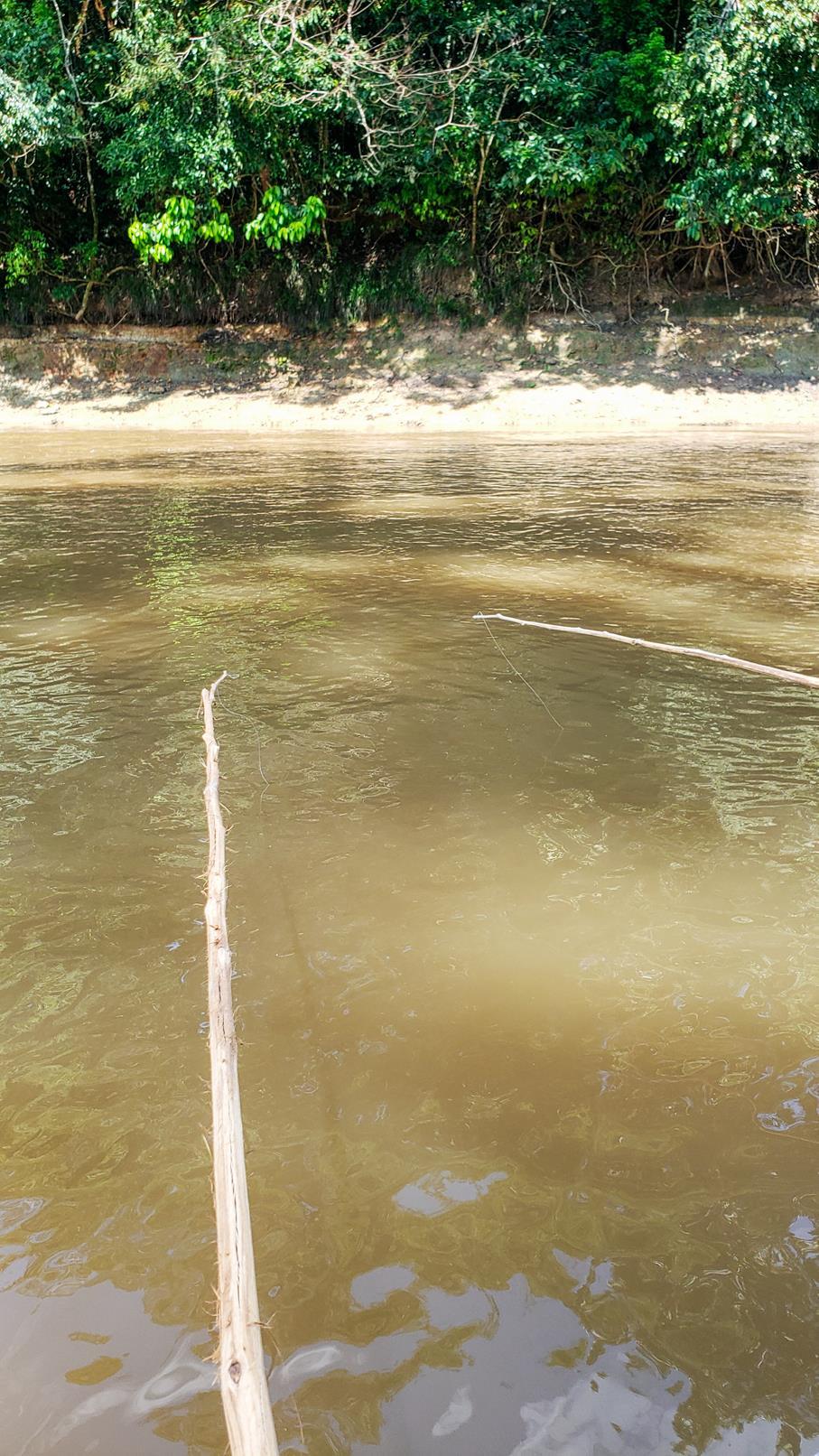 Piranha's vissen Amazone regenwoud Colombia