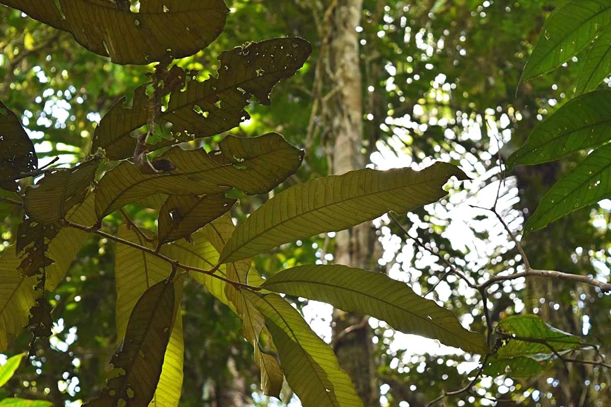 Regenwoud Zuid-Amerika Colombia