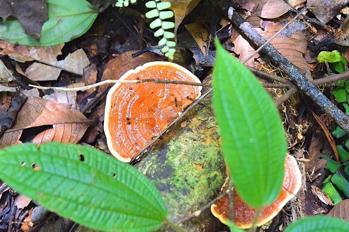 Reizen Colombia Zuid-Amerika Amazone regenwoud
