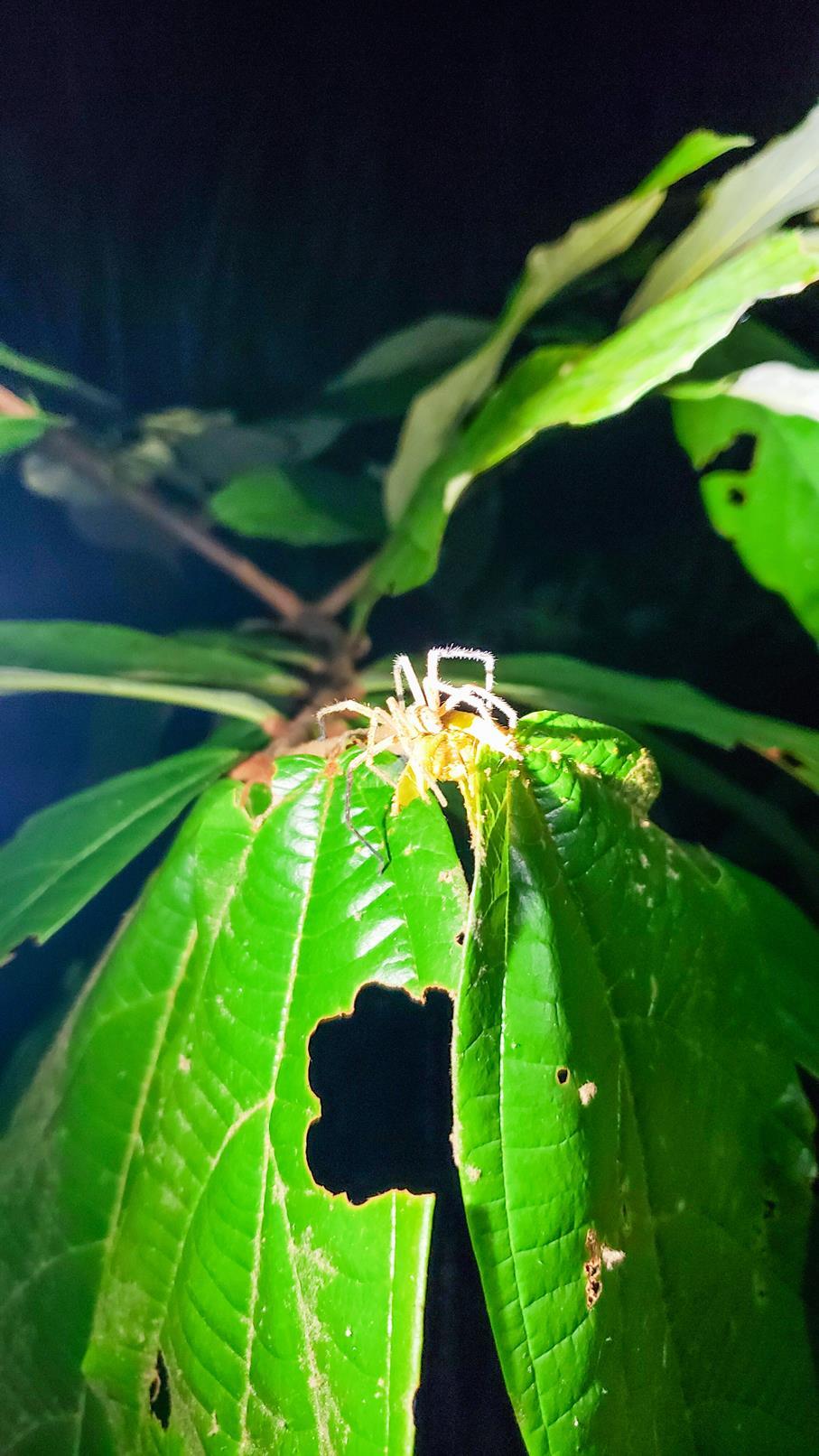 Spin regenwoud Colombia