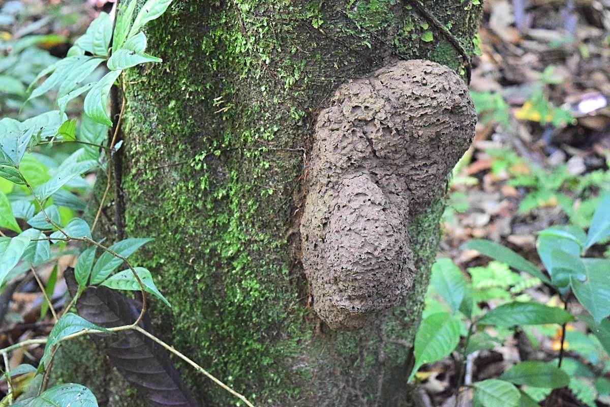 Termieten Amazone