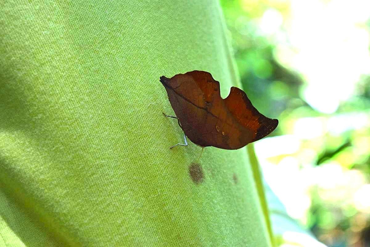Vlinders Colombia